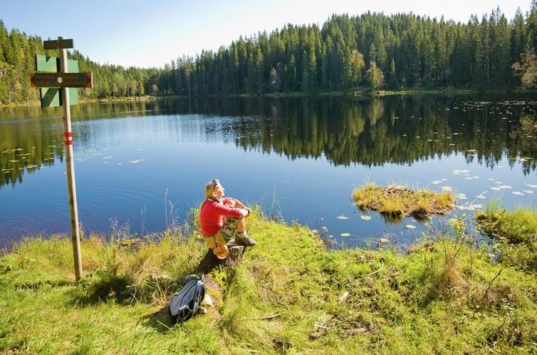 The-Oslomarka-forest-utsnitt